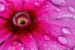 Wet Wallflower