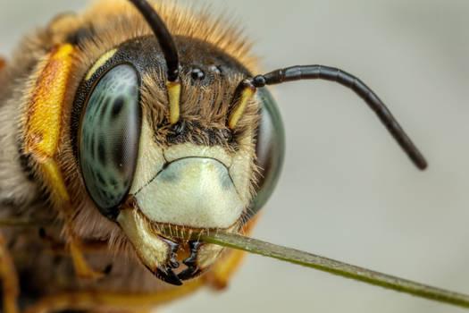 Resin Bee II