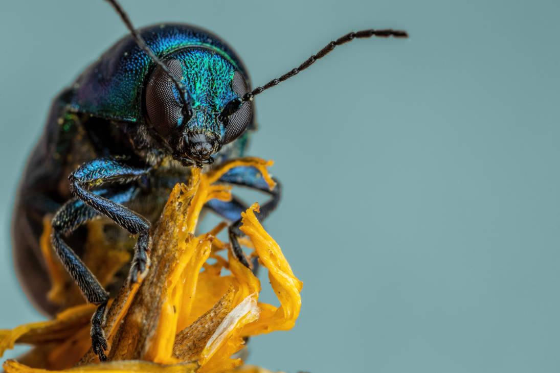 Metallic Beetle II