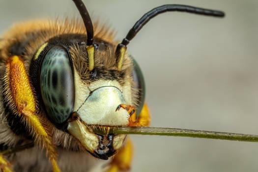 Resin Bee