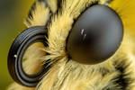 Swallowtail Portrait
