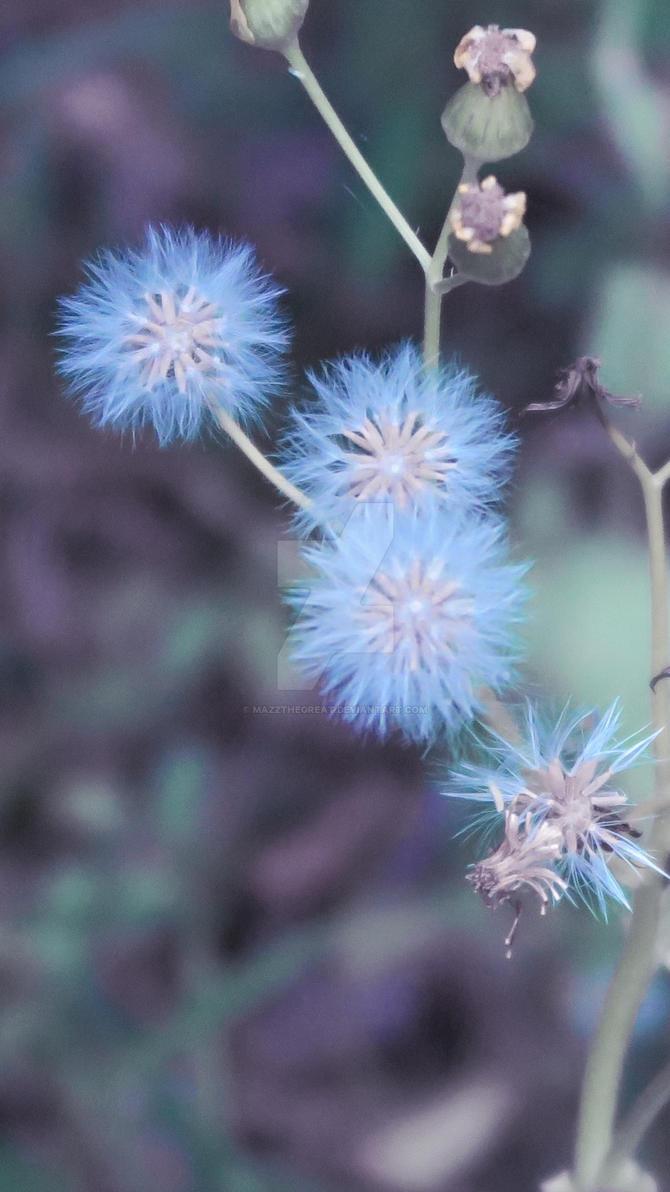 Blue Dandelions by MazzTheGreat