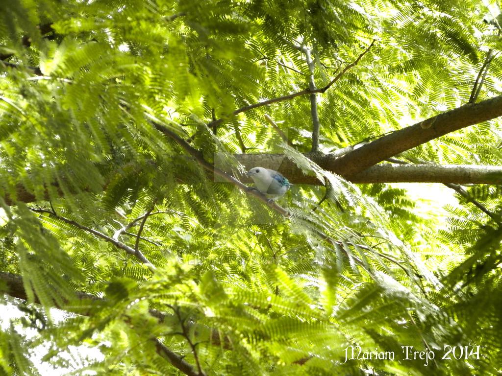 Azulejo de jardin by eliort on deviantart for Art jardin neufchateau