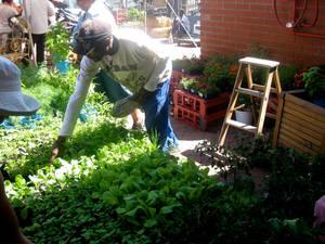 herbs for afrika