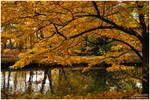 autumn in park I