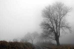 foggy by Wilithin