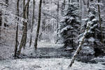 winter forest II