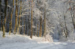 winter forest VI by Wilithin