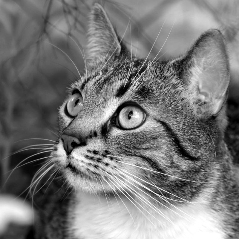 just a cat V by Wilithin