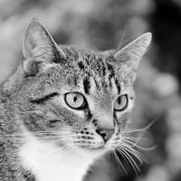just a cat VII