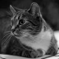 just a cat III