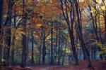 Autumn walk III