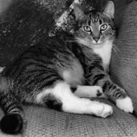 just a cat IX