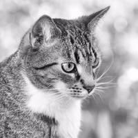 just a cat VIII
