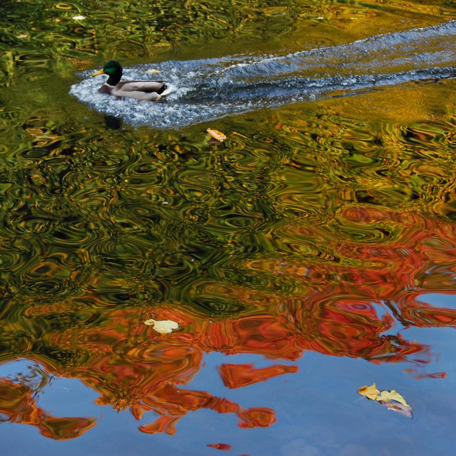 colours of autumn XXI by Wilithin