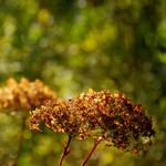 colours of autumn XXIV