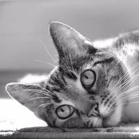 just a cat XIII