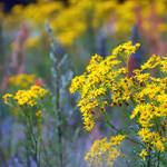colours of summer VIII by Wilithin