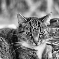 just a cat XIV