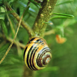 sleeping snail by Wilithin