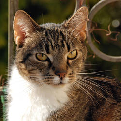 cat by Wilithin