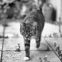 just a cat XV