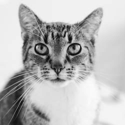 just a cat XVI