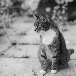 just a cat XVII