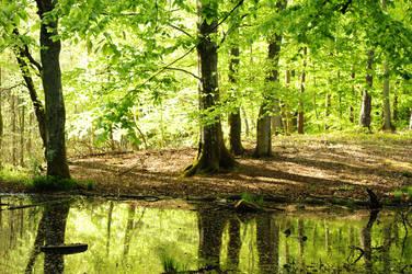 green beech forest II