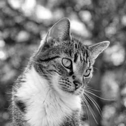 just a cat XVIII