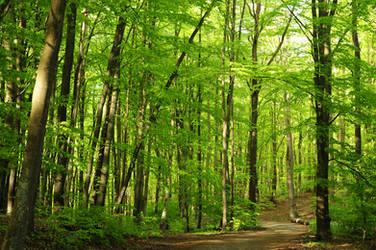 green beech forest IV