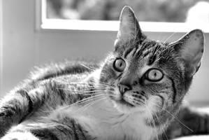 just a cat XIX