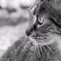 just a cat XX