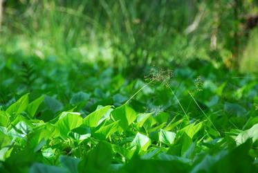 greenish green of green