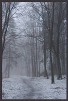 misty forest by Wilithin