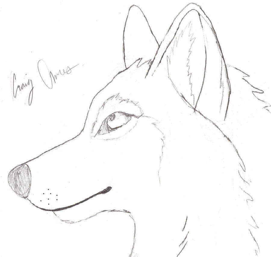 The Gallery For --u0026gt; Wolf Head Drawing Step By Step Easy
