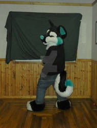 Squinty Husky Premade For Sale