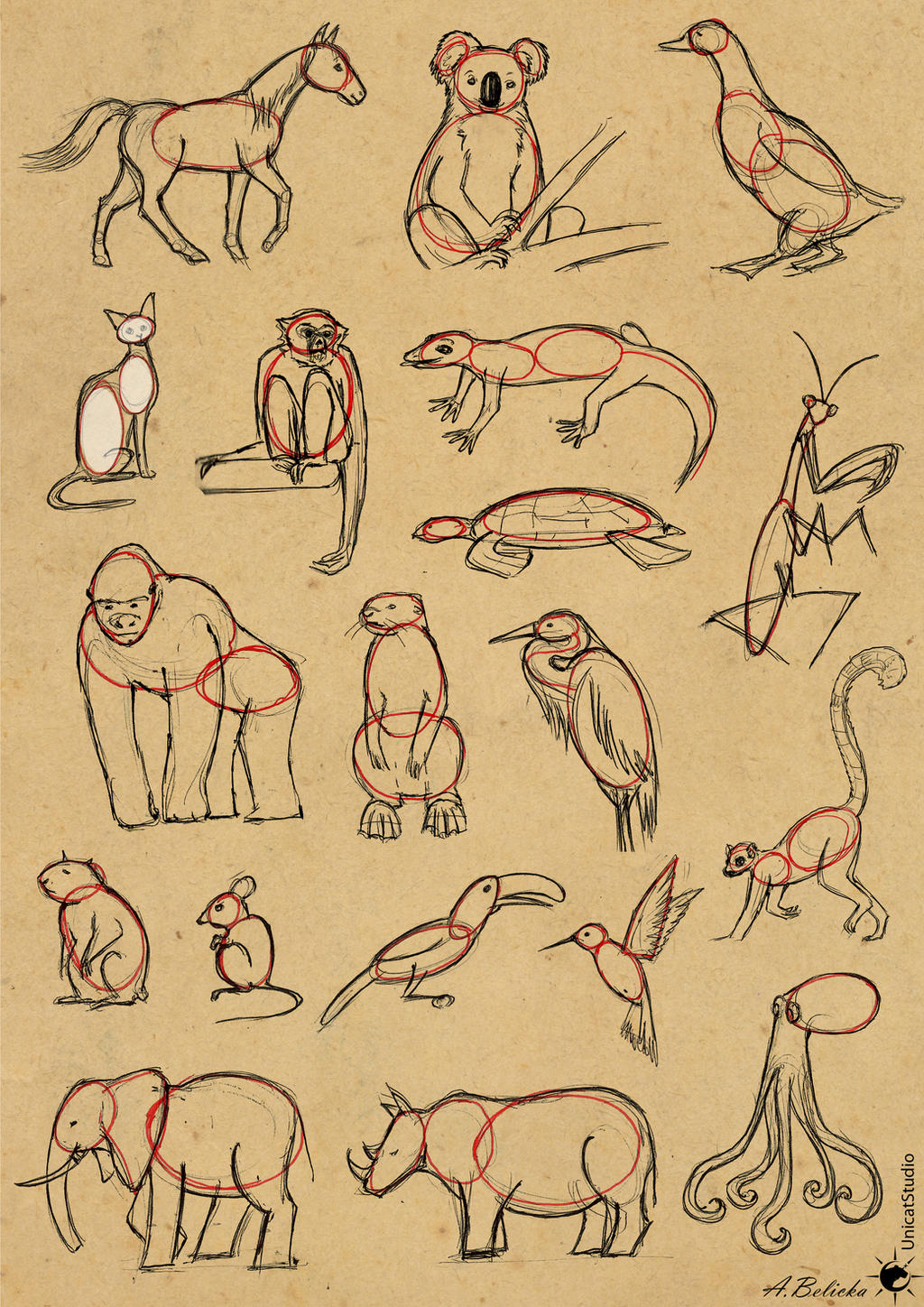 tutorial easy way to draw animals by unicatstudio on deviantart