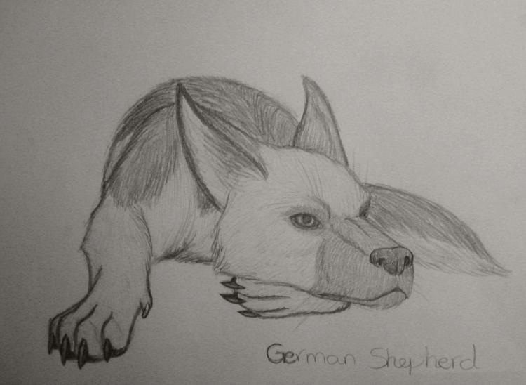 semirealism german shepherd by flareandicicle on deviantart