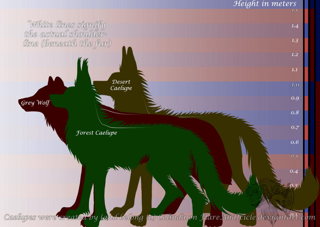 Grey Wolf Size Compared To Human