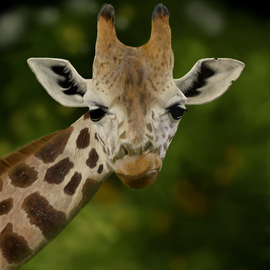 25 Adorable Giraffe Pictures Picshunger