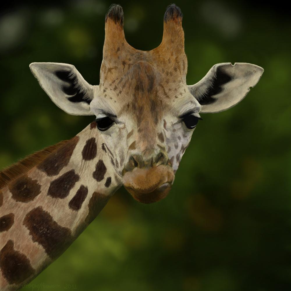 Giraffe. by Kopytkowa