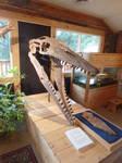 Morrison Museum: Tylosaurus skull