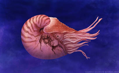 Nautilus by pixelfish