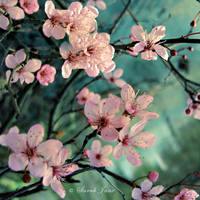 ..:: Little Blossom ::.. by Whimsical-Dreams