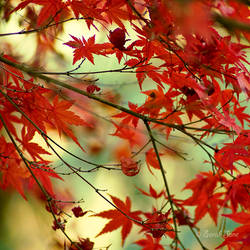 .:: Seasons ::. by Whimsical-Dreams