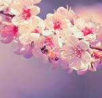 .:: La Fleur ::.