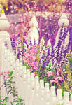 .:: My Secret Garden ::.