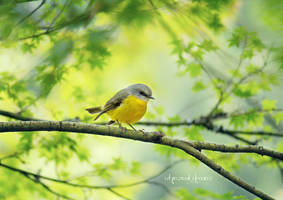 .:: Fly little Robin ::.