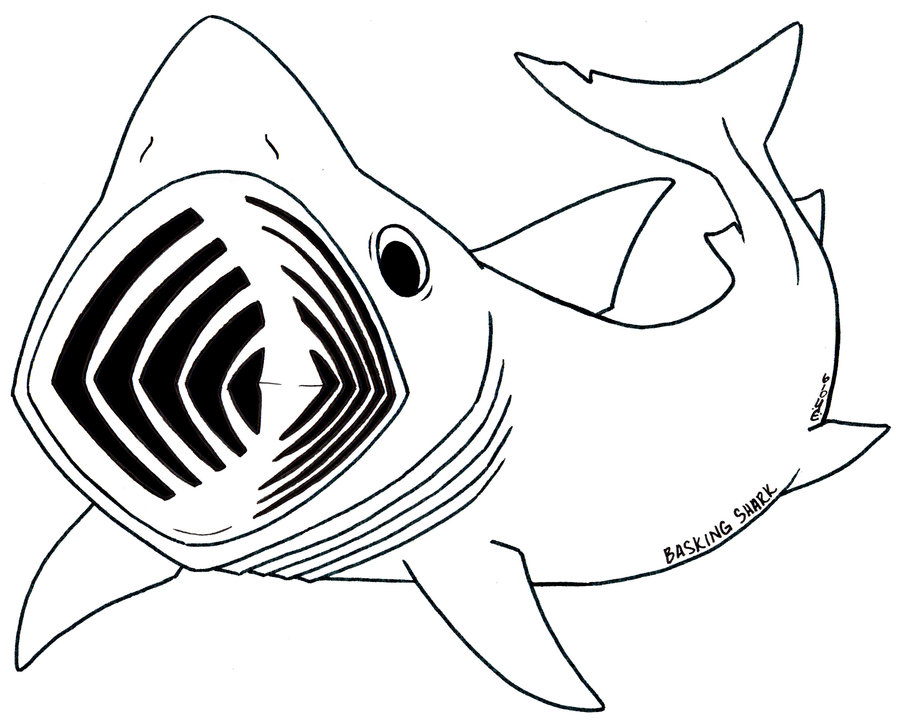 Line Drawing Shark : Basking shark lineart by yohnnilee on deviantart